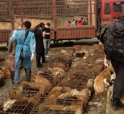 ΣΟΚ: Έσωσαν σκυλάκια λίγο πριν τα σκοτώσουν για να τα μαγειρέψουν