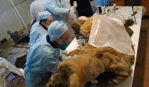 Είναι δυνατή η κλωνοποίηση του μαμούθ;