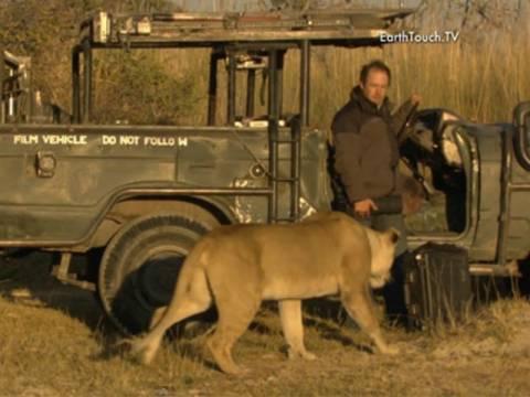 Βίντεο που κόβει την ανάσα: Λιοντάρι... μυρίζει καμεραμαν