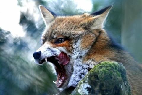 Νέα κρούσματα λύσσας στη Βόρεια και Κεντρική Ελλάδα