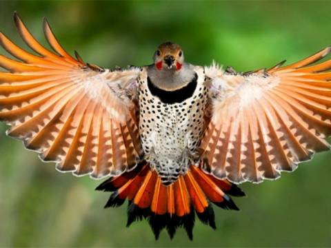 Τα πρώτα πουλιά είχαν τέσσερα φτερά!