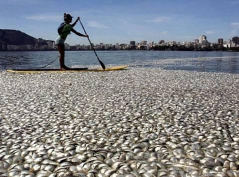 Βιβλικές εικόνες: Ξεβράστηκαν 65 τόνοι νεκρά ψάρια (pics)