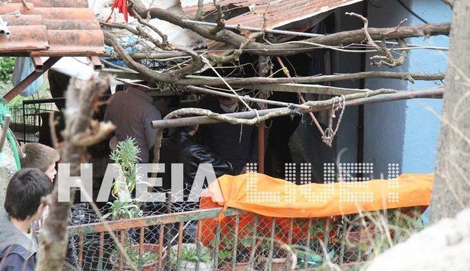 Τραγωδία στη Ηλεία: Τον δολοφόνησε για τα γουρούνια