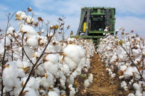 49.738 δικαιούχοι βαμβακοπαραγωγοί θα λάβουν 192, 8 εκατ.