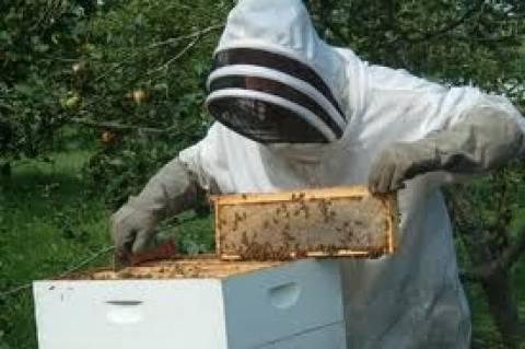 Με το ποσό των 360.000 ευρώ θα ενισχυθεί η μελισσοκομία
