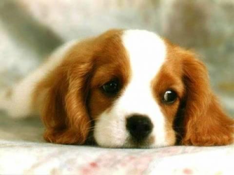 Σοκ στην Αμαλιάδα: Πέταξε το σκύλο από το μπαλκόνι