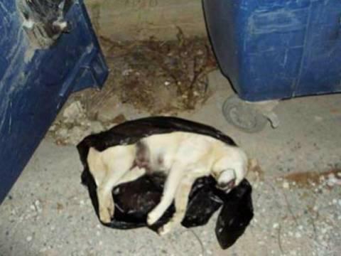 ΣΟΚ: Κακοποίησαν και πέταξαν στα σκουπίδια σκυλίτσα με τα μικρά της