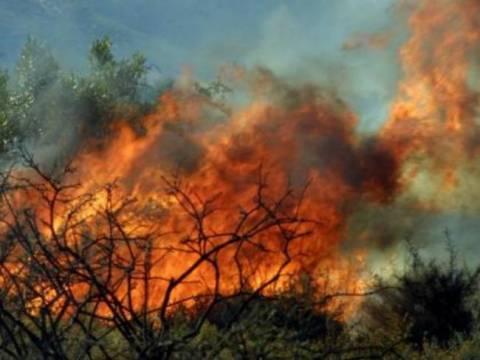 Σε εξέλιξη μεγάλη πυρκαγιά στη Λακωνία