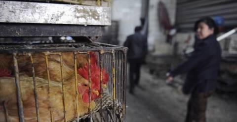 Συναγερμός στη Κίνα μετά τους δύο θανάτους από «γρίπη των πτηνών»