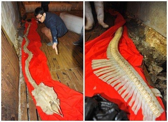 Βίντεο: Ψάρεψαν σκελετό τεράστιου πλάσματος της θάλασσας!