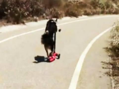 Τα απίστευτα κόλπα ενός σκύλου σε ένα βίντεο