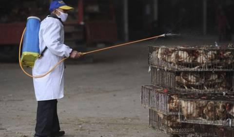 Κίνα: Αυστηρότερα μέτρα κατά της γρίπης των πτηνών