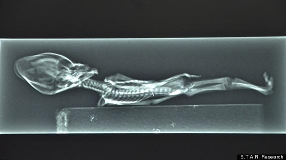Νέα υπόθεση Ρόσγουελ στις ΗΠΑ: Βρήκαν μικροσκοπικό εξωγήινο;