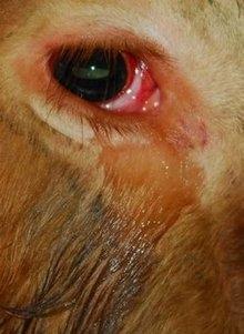Συγκλονιστική ιστορία: Ταύρος κλαίει και ικετεύει για τη ζωή του...
