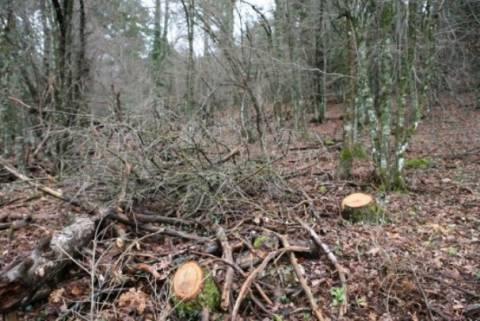 Τραγωδία: Πατέρας τεσσάρων παιδιών καταπλακώθηκε από δέντρο