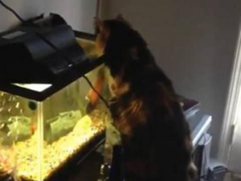 Βίντεο: Ψάρι επιτίθεται σε γάτα!