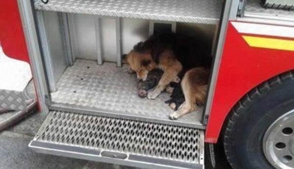 ΣΥΓΚΛΟΝΙΣΤΙΚΕΣ ΕΙΚΟΝΕΣ: Σώζει τα μικρά της από τη φωτιά!