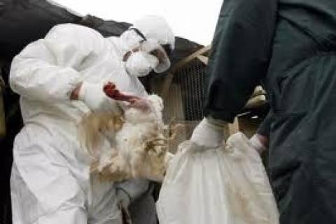 Κίνα: Στους 24 οι νεκροί από την νέα γρίπη των πτηνών