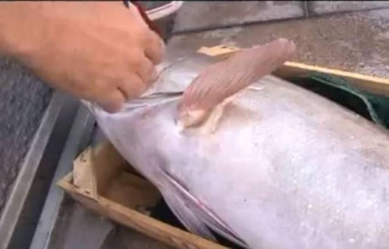 Κόρινθος: Δεν πίστευε στα μάτια του ο ψαράς! (βίντεο)