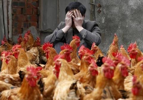 Θανατηφόρο στέλεχος της γρίπης των πτηνών μεταδίδεται μέσω του αέρα