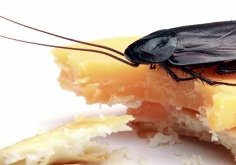 Σοκ: Πώς οι κατσαρίδες αντιστέκονται στα δολώματα