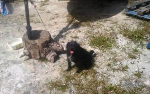 Καταγγελία για βασανιστήρια ζώων στη Ρόδο