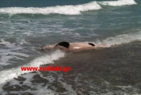 Ρόδος: Οι λουόμενοι έπαθαν σοκ με αυτό που είδαν στην ακτή! (pics)