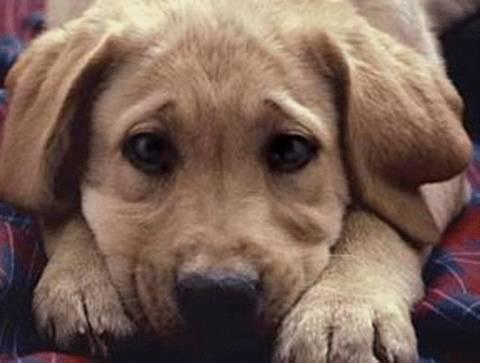 Διαρρήκτες βασάνισαν σκύλο με καμάκι από ψαροντούφεκο