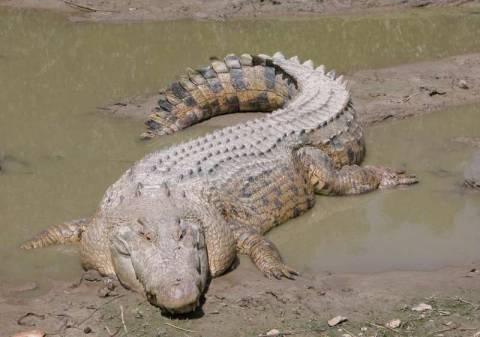 Τον κατασπάραξε κροκόδειλος ενώ ψάρευε στο ποτάμι