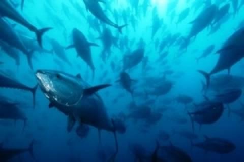 Αλιεία τόνου: Πρόγραμμα ελέγχου και επιθεώρησης στη Μεσόγειο
