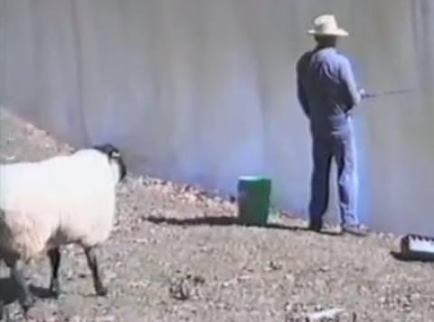 Βίντεο: Δείτε τι έπαθε ο ψαράς από το πρόβατο