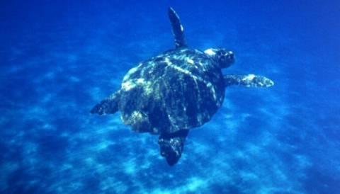 Νεκρή χελώνα Καρέτα-Καρέτα στο νέο λιμάνι Πρέβεζας