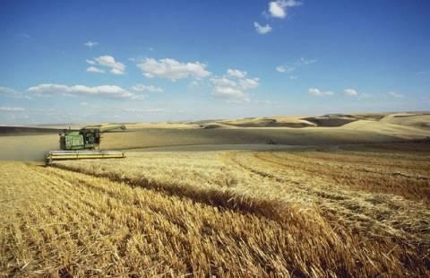 FAO: Η βραδεία αγροτική ανάπτυξη ίσως αυξήσει τις τιμές των τροφίμων
