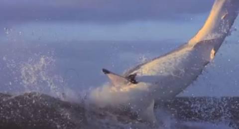Βίντεο: Επιθέσεις καρχαρία σε αργή κίνηση