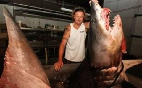 Βίντεο: Έπιασαν γιγάντιο καρχαρία, μήκους 3,3 μέτρων!