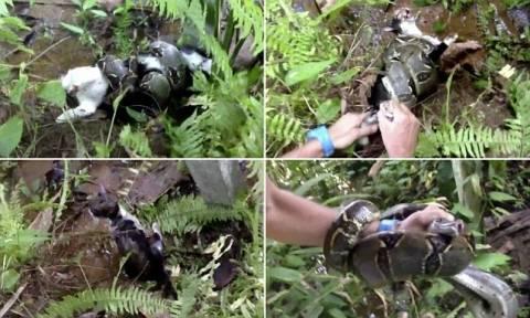 Βίντεο: Ήρωας έσωσε με τα χέρια του μια γάτα από έναν βόα