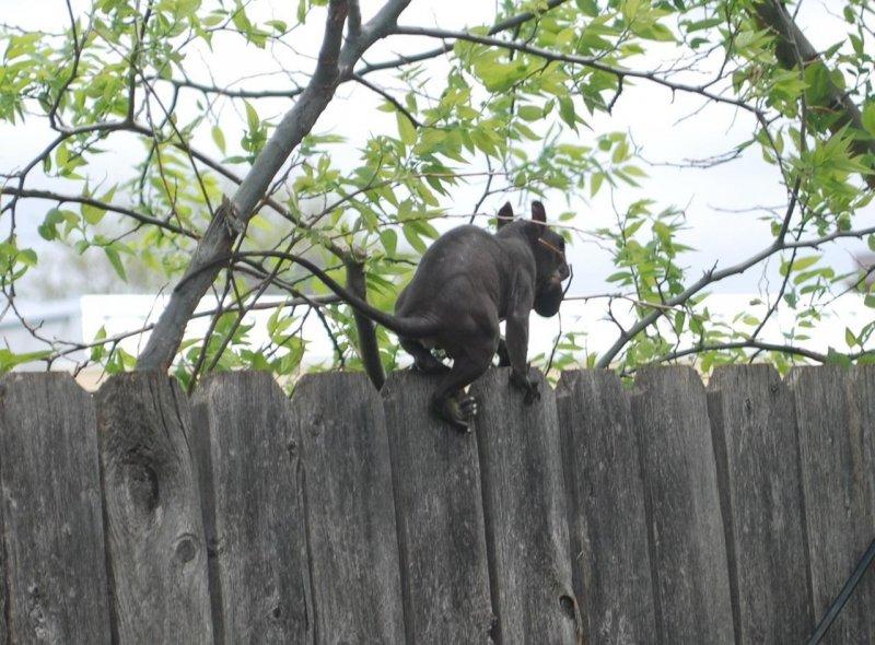 Πανικό προκάλεσαν στο διαδίκτυο φωτογραφίες ενός φρικιαστικού ζώου