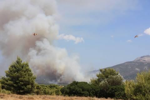 ΤΩΡΑ: Φωτιά στους Θρακομακεδόνες