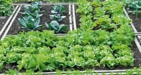 Δήμος Χανίων:  Δημοτικός λαχανόκηπος στα σκαριά