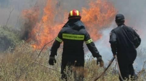 Σε εξέλιξη πυρκαγιά στο Διόνυσο Βοιωτίας