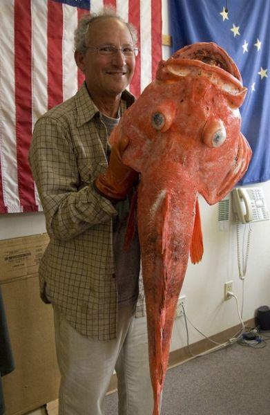 To ψάρι που ανακάλυψε το ελιξήριο της ζωής! Είναι πάνω από 200 ετών