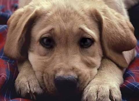 ΣΟΚ στα Χανιά: Κρέμασαν σκυλίτσα που μόλις είχε γεννήσει