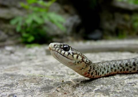 Μαντούδι: Τον δάγκωσε φίδι και πέθανε!