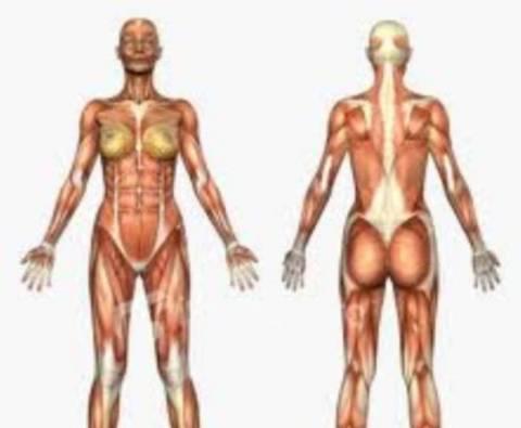 Δείτε τις άγνωστες λειτουργίες του ανθρώπινου σώματος