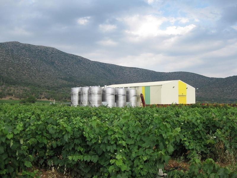 Eλληνικά Κελλάρια Οίνων: Το κρασί μας, από το 1895