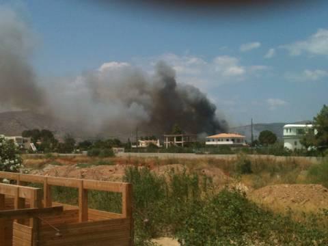 ΤΩΡΑ: Φωτιά στο Σχοινιά