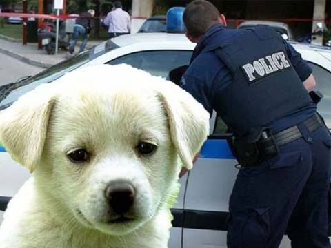Κακοποίηση και κακομεταχείριση ζώων: Πρόστιμα 30.000 ευρώ!