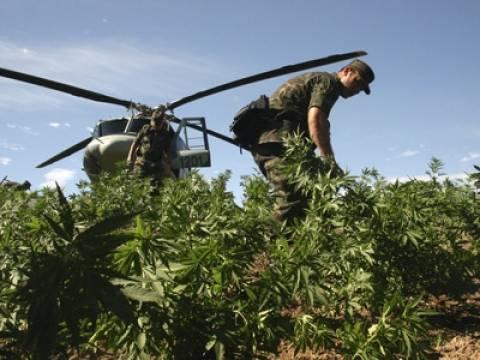 Μεξικό: Σκέφτονται να νομιμοποιήσουν τη μαριχουάνα