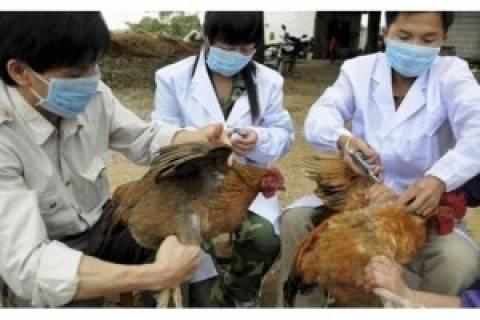 Νέο κρούσμα της γρίπης των πτηνών στην Κίνα