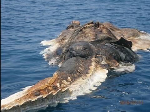 Σάλος στο διαδίκτυο: Βρήκαν ένα περίεργο νεκρό πλάσμα στη θάλασσα